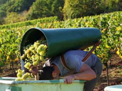 Ökonomierat Rebholz: Natuurwijn avant la lettre